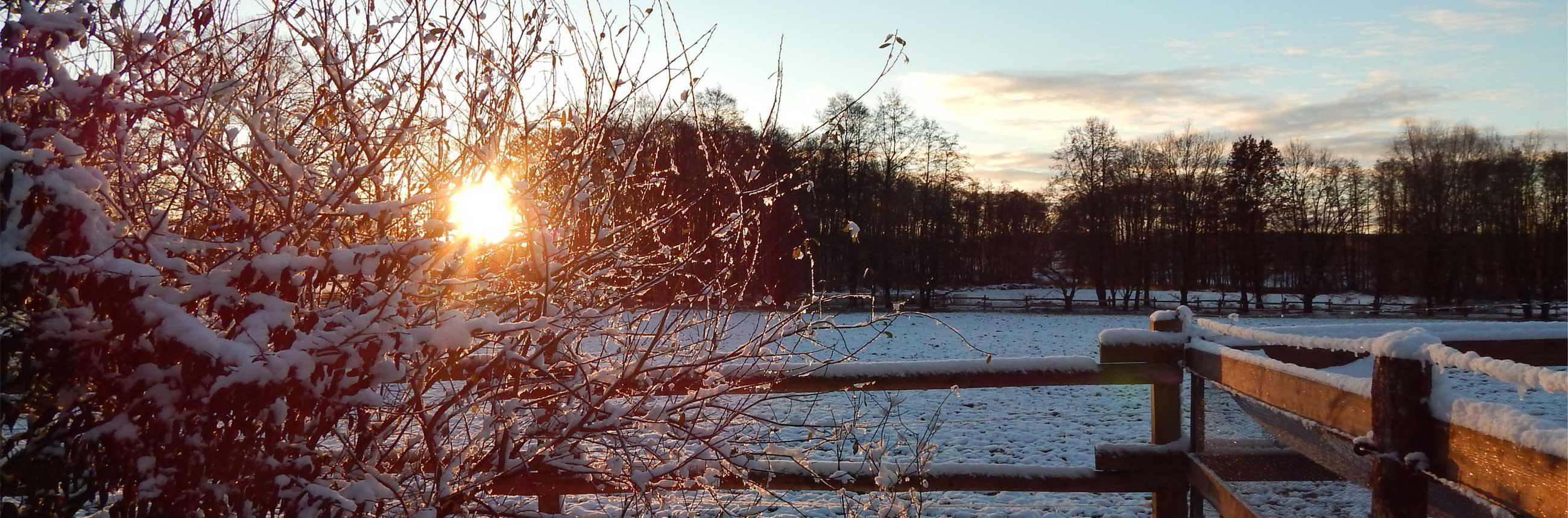 Winter auf dem Ellernhof